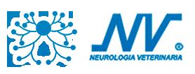 Neurología Veterinaria Getafe| Colaboración con clínicas en toda España | Más de 15 años de experiencia